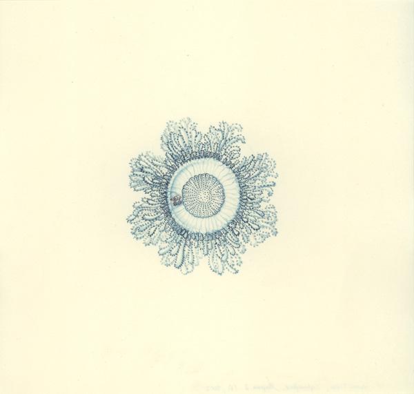 LaureTixier_Siphonophores,  Porpema 2 stade 2, 2002, aquarelle sur papier, 28,3 x 29,8 cm