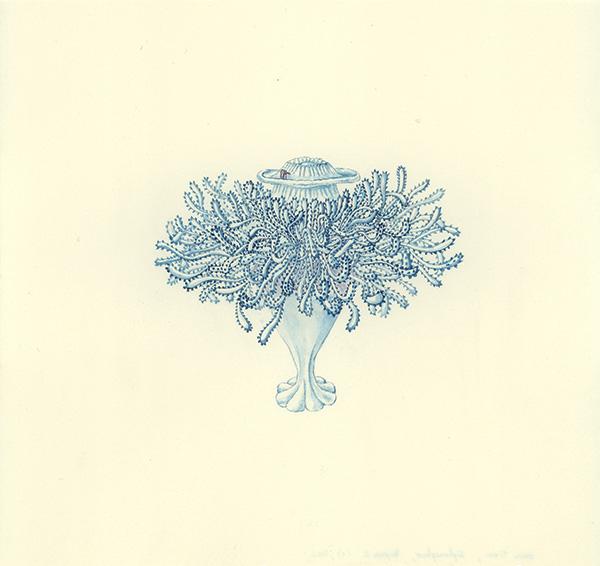 LaureTixier_Siphonophores,  Porpema 2 stade 3, 2002, aquarelle sur papier, 28,3 x 29,8 cm