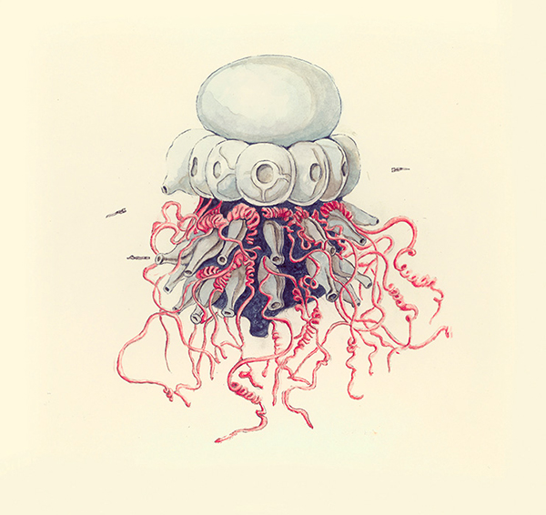 LaureTixier_Siphonophores,  Physalia , 2002, aquarelle sur papier, 28,3 x 29,8 cm, collection Mudam Luxembourg.