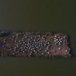 LaureTixier_Potager, semis à la volée sur le Marais Perdu, Île d'Oléron, 2016, Béton ducal teinté dans la masse (6 couleurs), [120] 37 x 30 x 22 cm, collection FDAC Essonne, photo © Philippe César